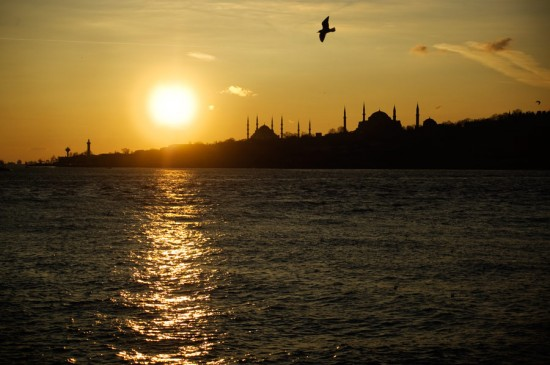 water_mosque_bird
